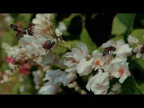 More oragens, More bees