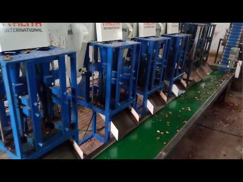 Automatic Cashew Sizing Machine