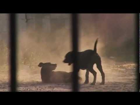 Street Dog family plays in golden dust