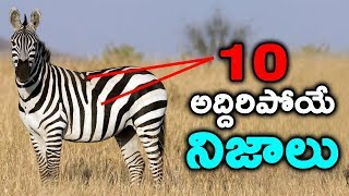 interesting facts in Telugu || T Talks