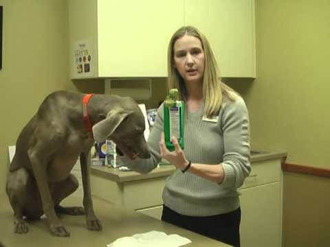 CET Enzymatic Chews for Large Dogs (30 Chews) Video