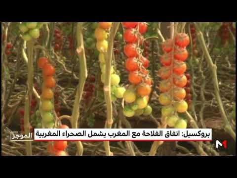 العرب اليوم - دمج الصحراء المغربية في الاتفاق الفلاحي مع المملكة