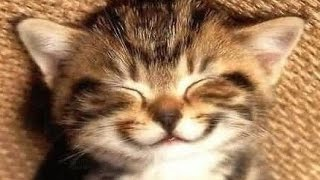 Смішні відео про котів