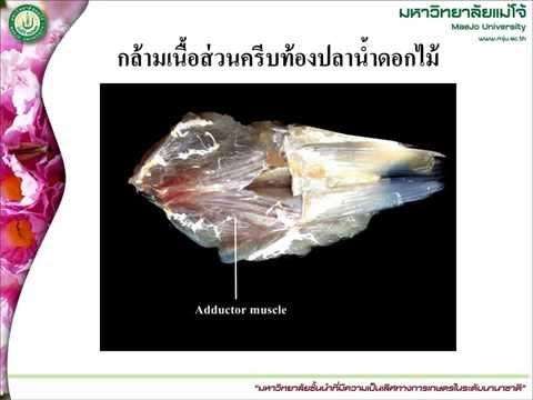 เส้นเลือดขอดในสาเหตุ perineum