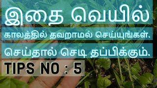 கோடைகாலங்களில் செடிகளை பாதுகாக்க | Tips No- 5 |