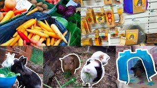 Shopping: Pet Supplies, Veggies & More!
