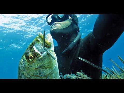 La pesca da reti su video collum