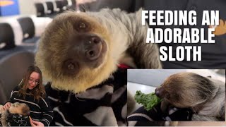 Feeding An Adorable Sloth! + Shopping For Pet Supplies And Visiting A Shelter!