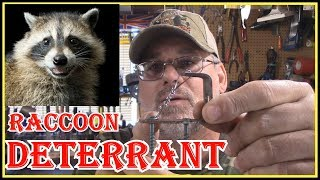 HOW TO SAFELY KEEP RACCOONS AWAY FROM YOUR HOUSE/PROPERTY AND OFF YOUR FENCES