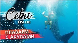Плаваем с огромными акулами!   Лучшее развлечение на Себу, Филиппины