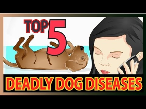 Video Top 5 Deadly dog Diseases (Dog health tips)