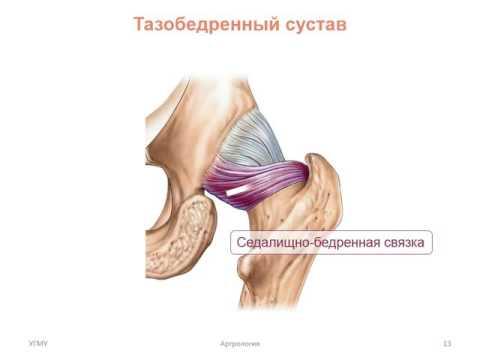 Соединения костей нижней конечности
