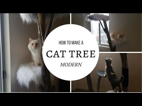 Can I Cat Out A Folder Tree
