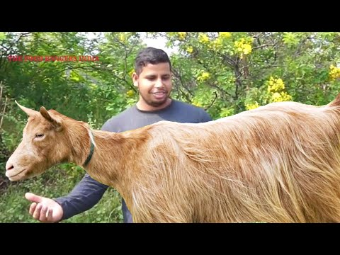 ONE GOAT 2 LEGS GREEN MEAT CURRY || INDIAN STYLE GOAT RECIPE COOKING || BEST MUTTON GRAVY CURRY ||
