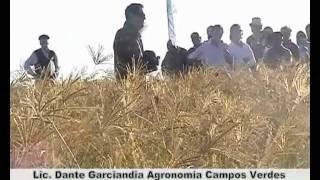 preview picture of video 'Megatérmicas: Grama rhodes en Carlos Tejedor 2010. Desarrollo de Megatérmicas de Campos Verdes.'