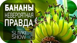 Невероятная правда о бананах [SLIVKI SHOW]