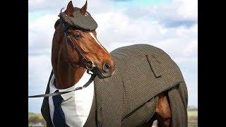 AMAZING Horse Compilation!
