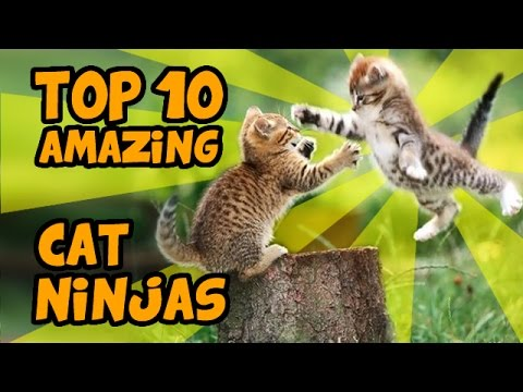 TOP 10 MOST AMAZING CAT NINJA VIDEOS