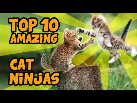 TOP 10 MOST AMAZING CAT NINJA VIDEOS