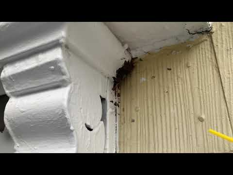 Carefully Exterminating Yellow Jackets in New Brunswick, NJ