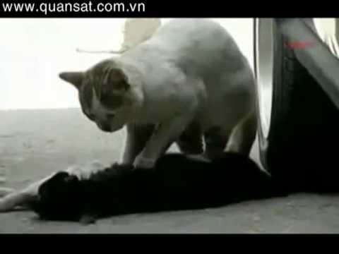 Cảm động chú mèo cố đánh thức 1 ng bạn đã chết