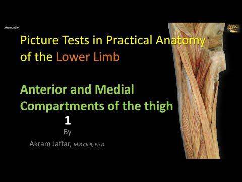 Test obrazkowy z anatomii kończyny dolnej - przednia część uda 1
