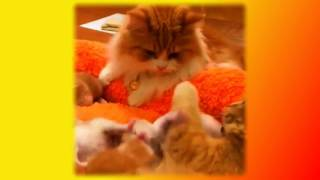 Самые смешные животные Кошки Собаки Для детей Fanny animals