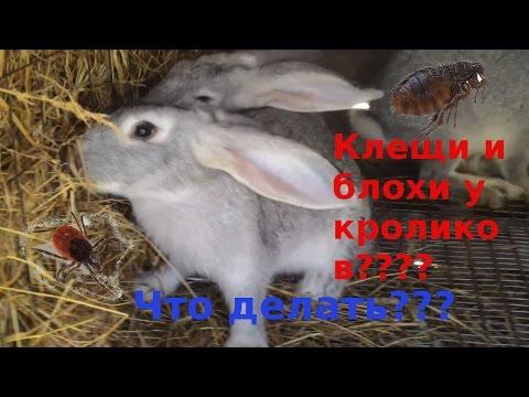 Ростов на дону анализы на глистов