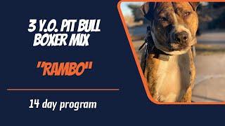 PIT BULL BOXER MIX / DOG TRAINING