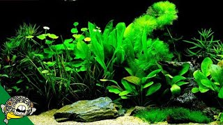 Which Fish Tank Plants to Try?
