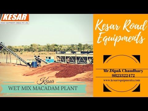 Soil Stabilizing Plant