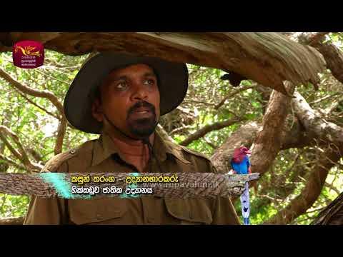 Sobadhara - සොබාධාරා | Season 2 | Episode - 27 | 2018-08-03 | Rupavahini Documentary
