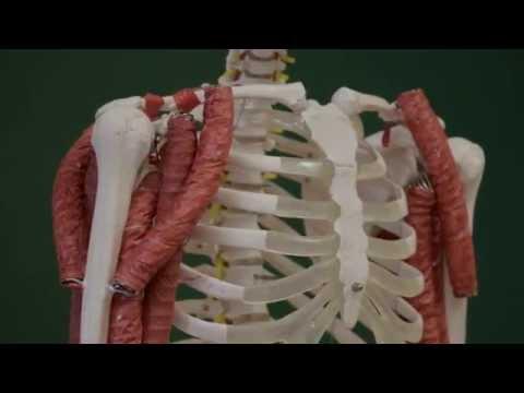 Jak pompować wszystkie mięśnie na pasku