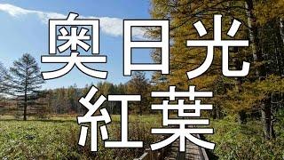 紅葉の奥日光をゆく 小田代ヶ原からいろは坂へ その32015/10/12