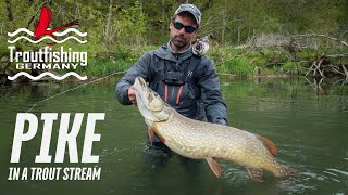 Fly Fishing for PIKE in a Trout Stream. My HEAVIEST Pike Ever!