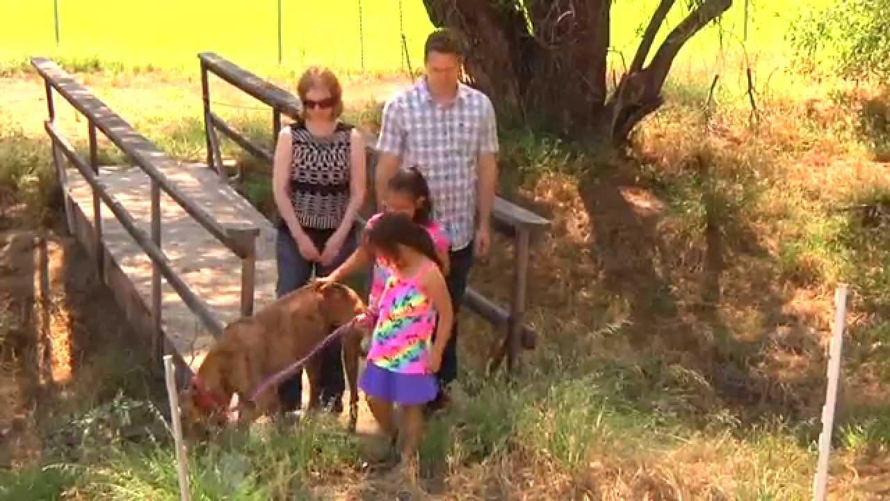 Greyhound Rescue PSA