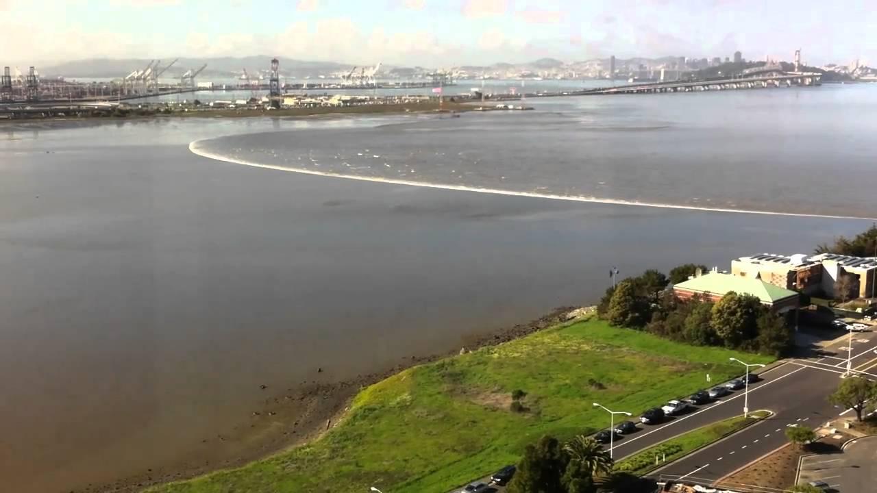 Japan Tsunami Casually Hits San Francisco Bay