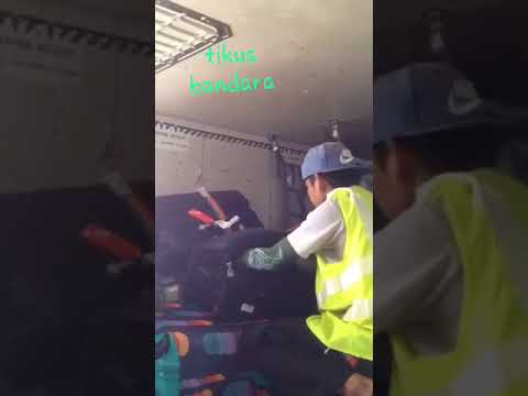 How your checked bags are treated in Indonesia.