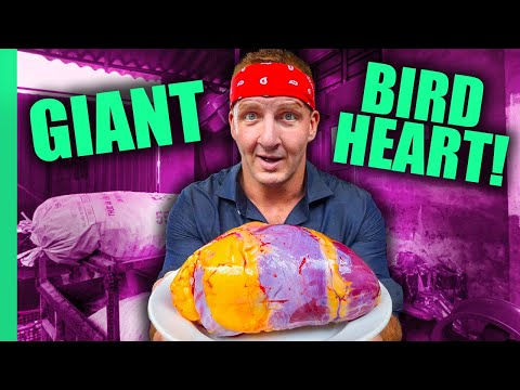 Can You Eat That?? World's STRANGEST Animal Organ Dishes!!