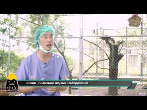 Thrombophlebitis และความอ่อนแอ
