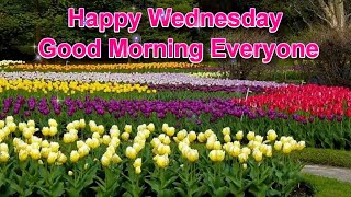 Happy Wednesday Greetings|Quotes|Sms|Wishes|Saying|E-Card|Wallpapers/|Whatsapp Messages.