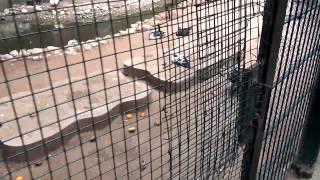 Смотреть онлайн Зоопарк в Марокко, что там увидеть