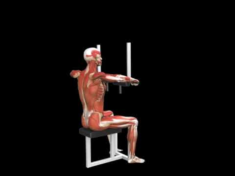 Seated Rear Delt Row (Lever)