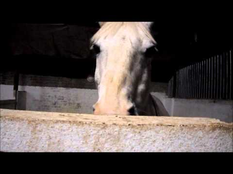 sisters horses xxxx