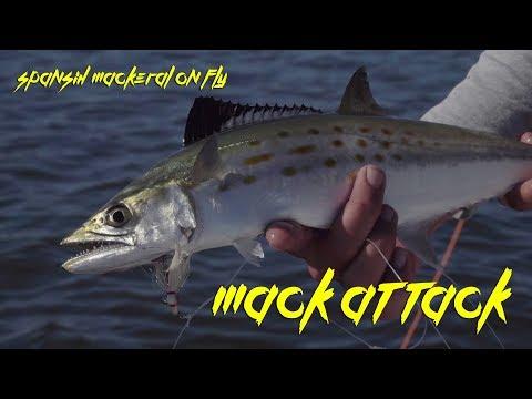Fly Fishing for Spanish Mackeral