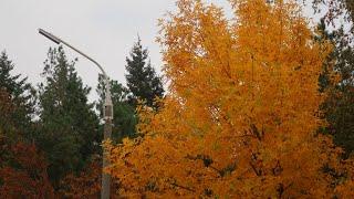 Осень в ростове на дону сообщение