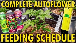 How to Water and Feed Autoflowers - Made Simple