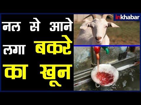बकरा ईद वायरल वीडियो; UP में नल में आया बकरे का खून; Bakra Eid Viral Video; Bakra Eid Viral Video