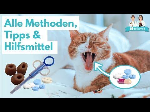 Katze Tablette geben: Alle Methoden, Tipps, Tricks und Hilfsmittel