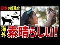 【海外の反応】素晴らしい!犬と猫にマイクロチップ埋め込みを義務付ける日本の法律に海外が称賛